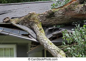 Storm Damage to a Roof - Oak tree falls on house ripping...