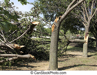 Storm damaged trees and branches