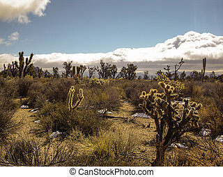 Storm in the Mojave Desert
