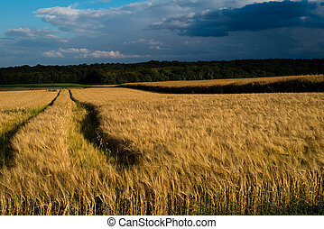 Storm over wheat crops