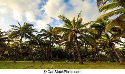 Storm Palms timelapse