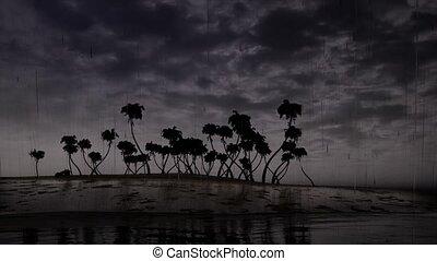 Storm palms tree ocean 4k