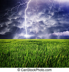 storm - Thunderstorm with lightning in green meadow.