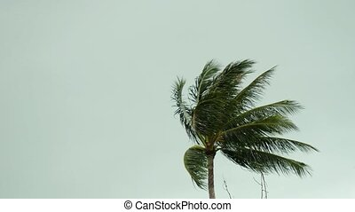 Storm winds blowing palm trees on tropical island. 3840x2160...