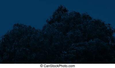 Storm Winds Rocking Tree Tops At Night - Tree swaying in...