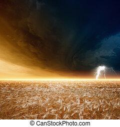 stormy ég, érett, árpa