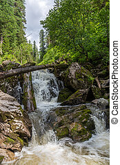 Stormy mountain river in the forest in Altai, Russia