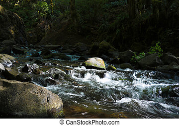 Stormy mountain river in the forest in summer sunny day