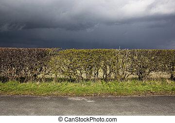 stormy roadside