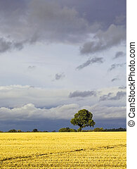 stormy skies 3 - stormy skies over a rural landscape