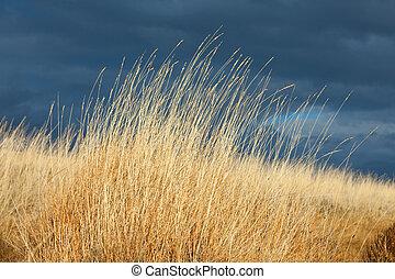 Stormy skies and dry prairie grass