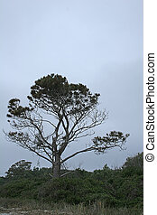 Stormy Skies - Winter trees against a backdrop of stormy...