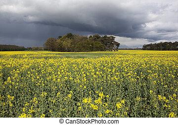 stormy sky landscape