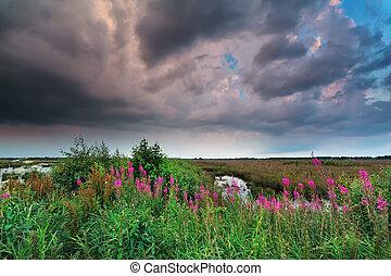stormy sky over marsh with purple wildflowers