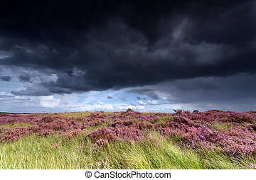 stormy sky over meadows with heather
