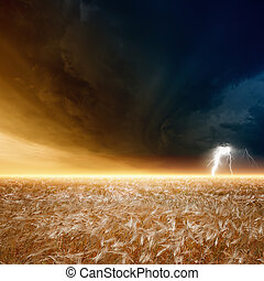 Stormy sky, ripe barley - Nature force background - field of...