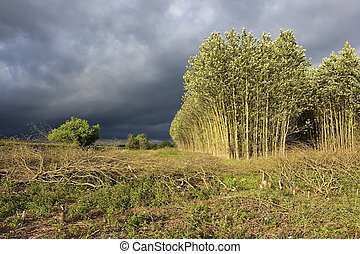 stormy summer landscape
