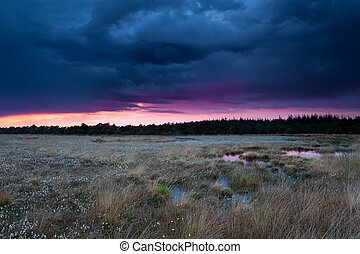 stormy sunset sky over swamp with cottongrass, Drenthe,...