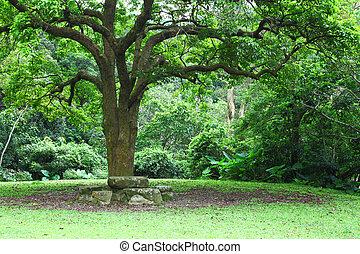 stort träd