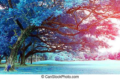 stort träd, i parken, med, brista, lätt