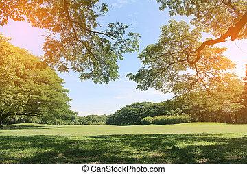 stort träd, in, publik parkera, med, brista, lätt