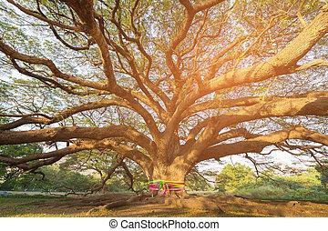 stort träd, in, trädgård, med, sol lätta
