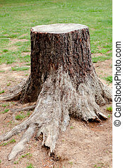 stort träd, snitt, gammal, rötter