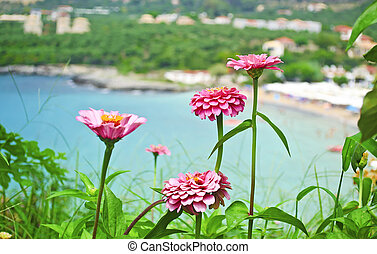 Stoupa in Peloponnese Greece - pink flowers in front of the ...