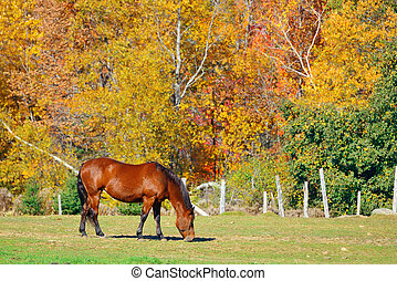 Stowe Countryside view - Horse at countryside in Stowe with...