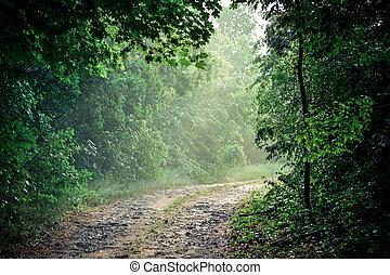 straße, wälder, schmutz