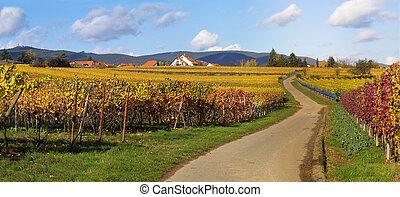 straße, wineyards