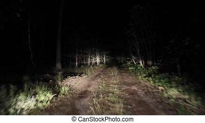 straat, 14, bos, nacht, paardrijden, night.