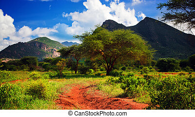 straat, afrika, west, struik, savanna., grond, tsavo, kenia,...