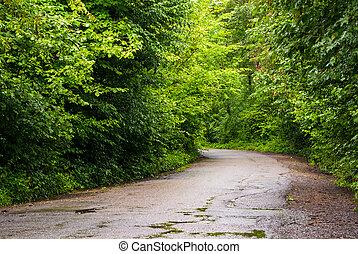 straat, door, de, bos, in, bergen