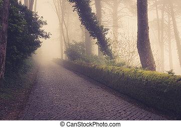 straat, door, een, gouden, bos, met, mist, en, warme, licht