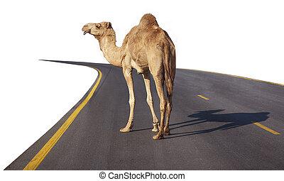 straat, kameel