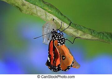 strabiliante, momento, circa, farfalla, cambiamento