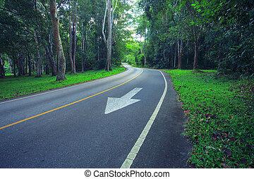 strada asfaltata, in, profondo, foresta, uso, come, landtransport, in, natura, selvatico