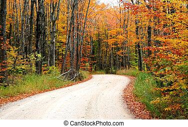 strada, attraverso, alberi autunno