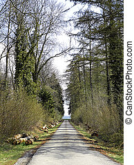 strada, foresta