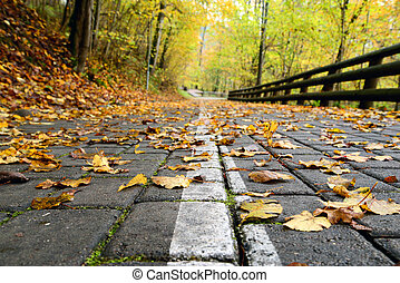 strada, foresta, autunno