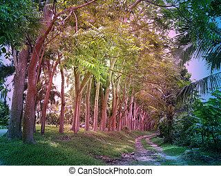 strada, foresta, bello, tropicale