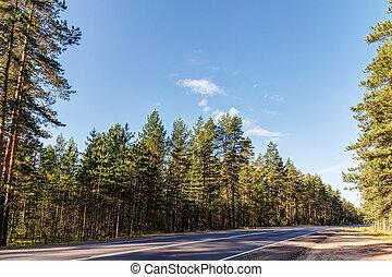 strada, foresta, pino