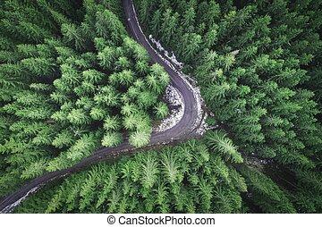 strada, fuco, foresta, vuoto