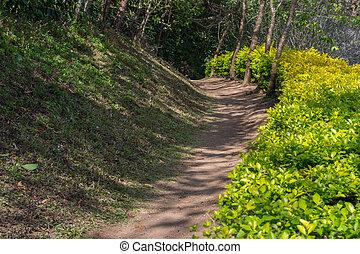 strada immondizia, attraverso, il, foresta, in, tailandia