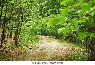 strada immondizia, in, il, foresta