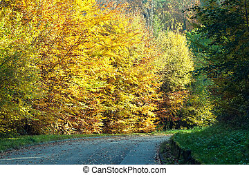 strada, in, autunno, forest.