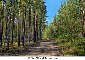 strada, in, foresta