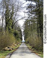 strada, in, il, foresta
