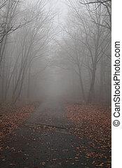 strada, in, il, nebbioso
